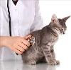 Ветеринарные клиники в Кузнецке